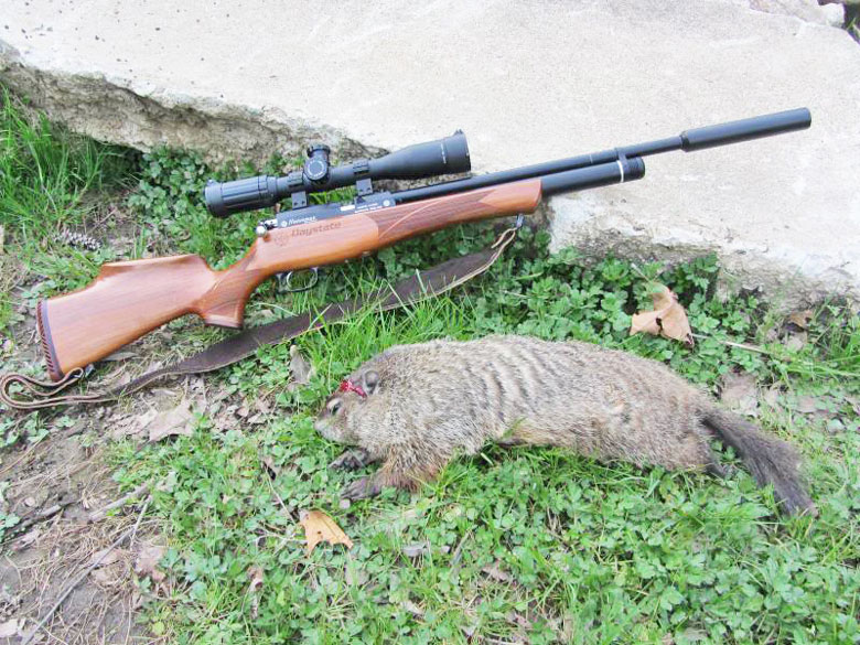 Frog hunting with my Daisy model 25 BB gun – Running Central