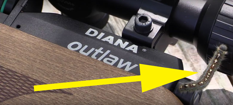 Diana Outlaw Video Review By AEAC