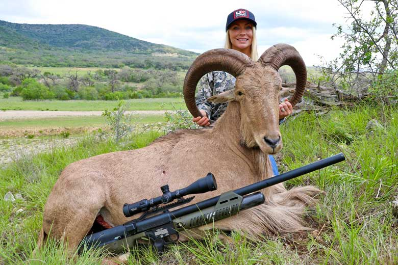 Pending World Record Aoudad Taken With Umarex Hammer In South Texas